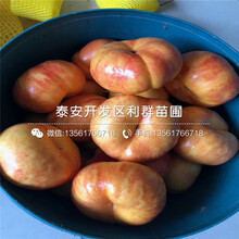永莲蜜桃9号桃树苗、永莲蜜桃9号桃树苗多少钱图片