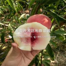 哪里有出售中蟠15號桃樹苗、中蟠15號桃樹苗價格是多少圖片