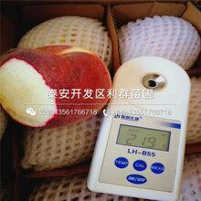 新品种桃树苗一棵多少钱