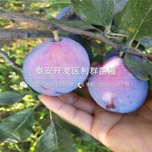批發李子樹苗品種圖片