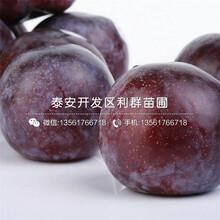 山(shan)東大總統李子(zi)樹(shu)苗報價圖片
