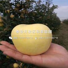 2019年123苹果苗报价、今年123苹果苗价格是多少图片