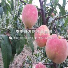 黄金蟠桃树苗、黄金蟠桃树苗品种图片