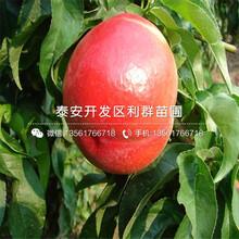 大红桃树苗品种介绍、大红桃树苗多少钱一棵图片
