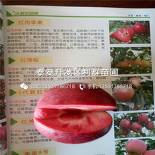 润太一号苹果树苗品种介绍、润太一号苹果树苗多少钱一棵
