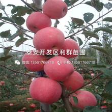 七月(yue)天(tian)仙隻huai)緋鍪邸? yue)天(tian)仙隻huai)緇di)圖片