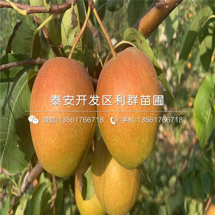 喜水梨树苗价格、喜水梨树苗报价