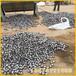 瓊海水泥廠鋼鍛鋼球直徑100鋼鍛5055