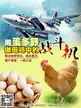 潍坊悦康生物蛋多舒四大功效增产增蛋输卵管炎肠炎