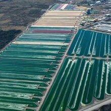 因地制宜,站在水产养殖前沿,工厂化循环水养殖-大棚养殖