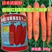 红冠黑田胡萝卜种子武藏野耐热夏季可种超级五寸秋季四季播300g