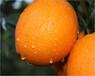 正宗江西贛南臍橙紐荷爾臍橙新鮮時令水果整箱批發臍橙