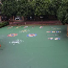 某中心小学中心小学硅PU和丙烯酸球场改造工程完成完成-健宇体育