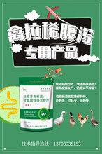 腸康;禽大腸桿菌的治療方案:禽大腸桿菌病特效藥,肉雞大腸桿菌特效藥圖片