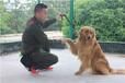 江苏宠物训练基地-南京宠物训练基地-派多格寄训中心