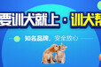 上海训狗基地-训狗多少钱-派多格寄训中心
