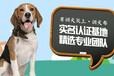 桂林寵物培訓學校-訓犬幫