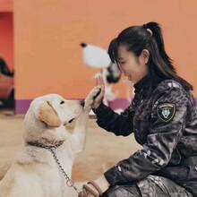 浙江寵物訓練基地-杭州寵物訓練基地-派多格寄訓中心圖片