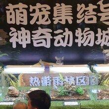 水母桶出租动物租赁羊驼租赁图片