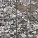 1公分8518核桃树苗结果现状-雨山区-嫁接8518核桃树苗批发基地