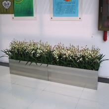 湖北花盆装饰、成品花箱尺寸加工定制图片