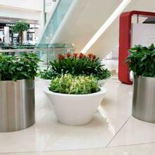 上海花盆花架、公路花箱做法厂家直销图片