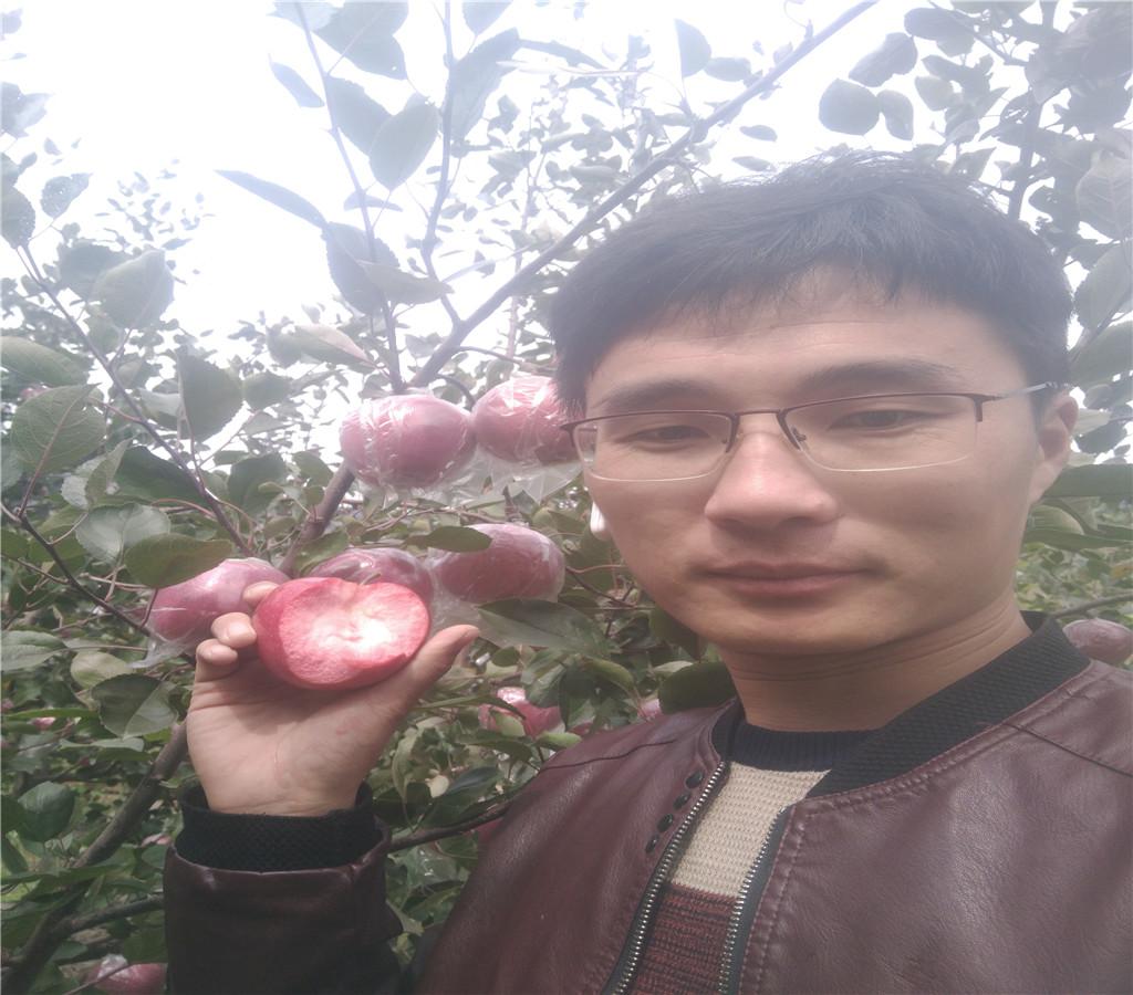 煙富8號蘋果苗蘋果苗報價