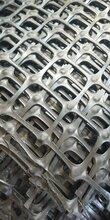 河南生產擋土墻用雙向塑料格柵tgsg50kn塑料格柵圖片