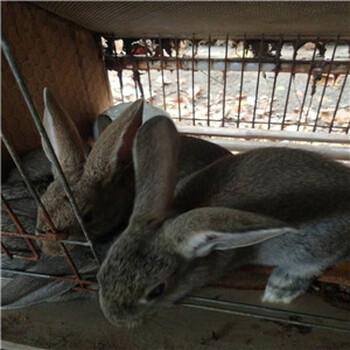 养殖100只兔子利润多少钱
