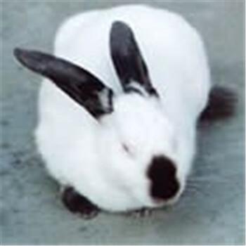 南充养殖肉兔的利润肉兔养殖利润肉兔价格