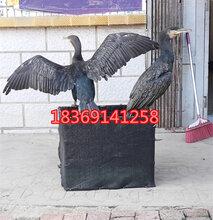 哪里有卖鱼鹰的成年鱼鹰多少钱一只纯种鱼鹰价格图片