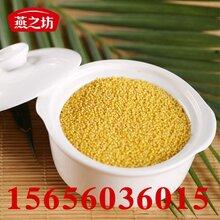 黃小米低價直銷五谷雜糧代加工小米粥原料價格圖片