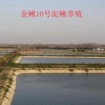 湖北金鳅10号水产养殖