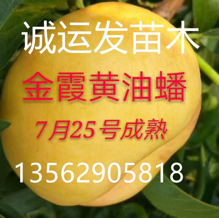 7月离核毛桃的品种大全