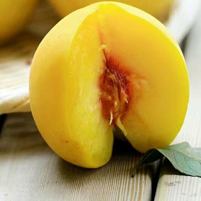 6至9月成熟的黄桃品种桃苗晚熟品种