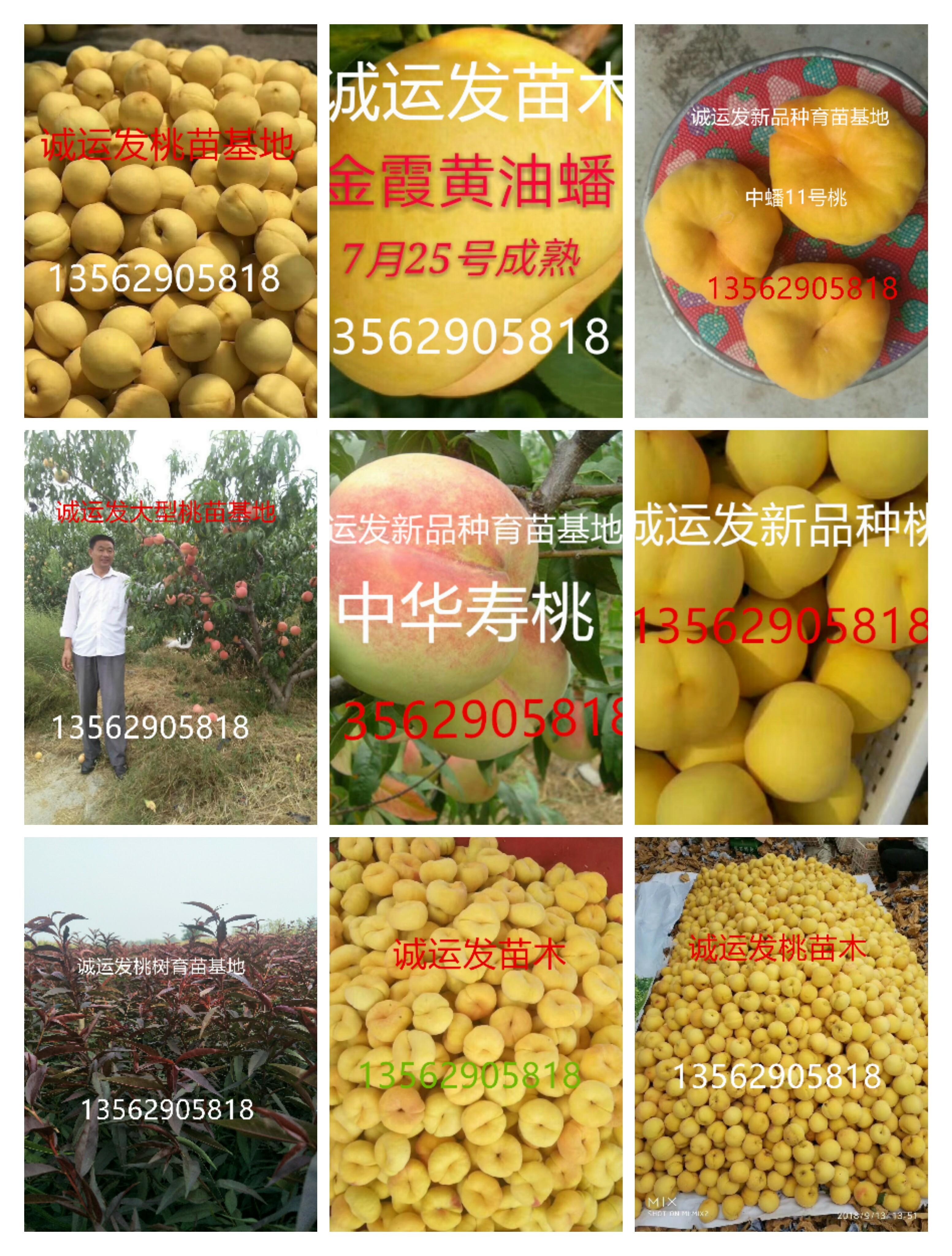 16个桃树品种简介