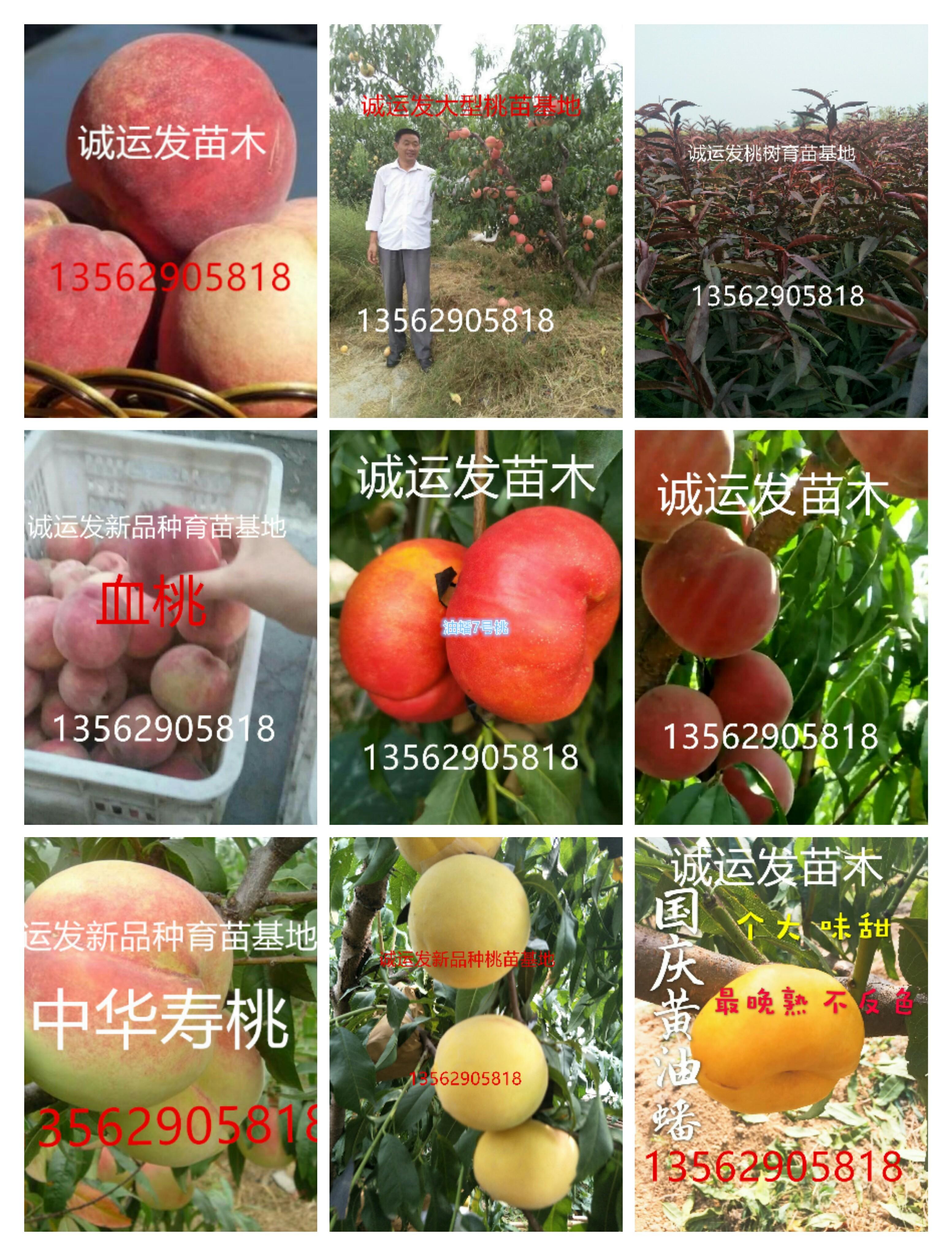 2,早熟桃—春  春简介:是所有新育成的特早熟新品种,成熟时是红色的