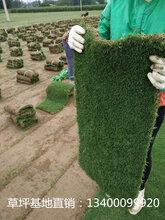 湖州绿化草坪-湖州草坪种植多少钱-湖州草坪种植基地