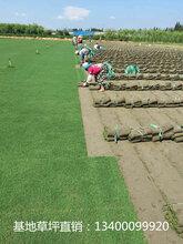 芜湖草坪-芜湖草坪种植基地-芜湖最大的草坪种植基地-芜湖草坪批发零售基地