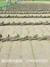 马鞍山草坪-马鞍山草坪种植基地-马鞍山最大的草坪种植基地-马鞍山草坪批发零售基地