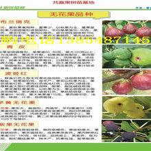 哪里买果树苗卖多少钱果树苗育苗基地在哪里
