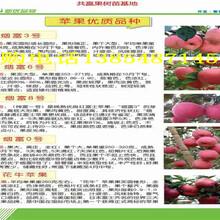 湖北十堰哪里卖晚熟桃树苗的好图片