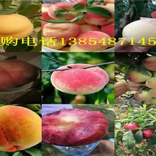 四川巴中红富士苹果树卖才多少钱一株图片