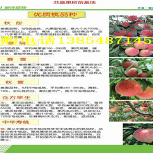 湖北恩施果树苗今卖多少钱一棵、果树苗苗哪里有图片