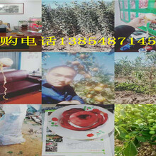 甘肃兰州晚熟的桃树苗才卖多少钱给你图片