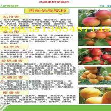 四川眉山富士苹果树今卖多少钱一棵、富士苹果树苗哪里有图片