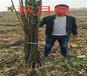 内蒙古阿拉善盟卖的美早樱桃树多少钱_果树苗育苗基地
