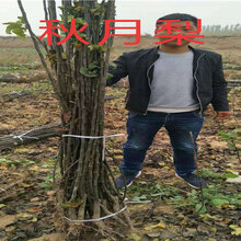 湖北咸寧賣的2年早熟桃樹多少錢_3年早熟桃樹批發價