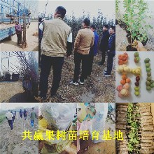 露天草莓苗育苗基地、重慶黔江草莓苗哪里有賣圖片