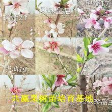 草莓苗基地、內蒙古海拉爾賣的露天草莓苗多少錢一株圖片
